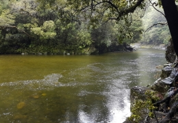 Rising river with New Zealand Fly Fishing Guide, Tony Entwistle.