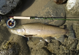Last trout of the season_ 66 cms, unweighed, released