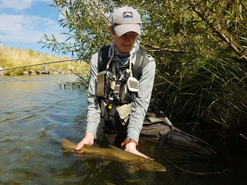 Local River Brown Trout, South Island New Zealand