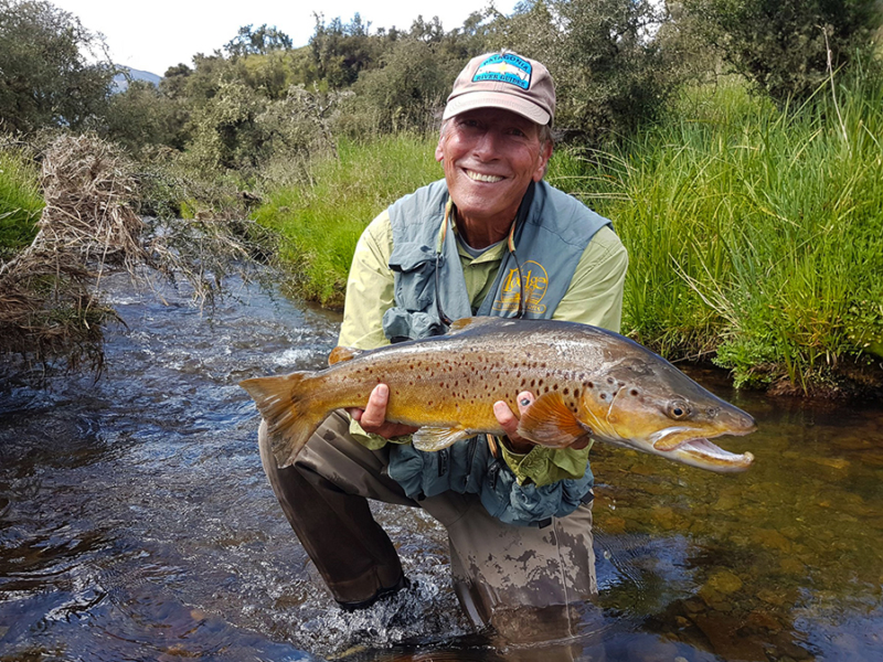 Small Stream Brown Trout Fishing New Zealand