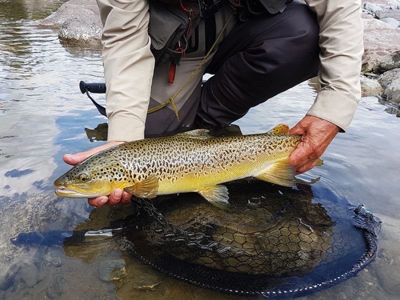 Dry Fly Fishing South Island New Zealand