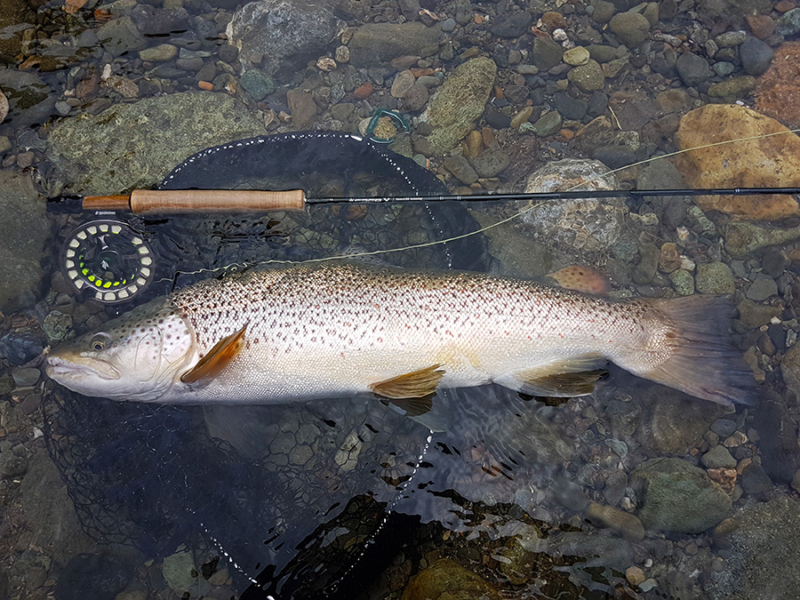 New Zealand Trophy Brown Trout