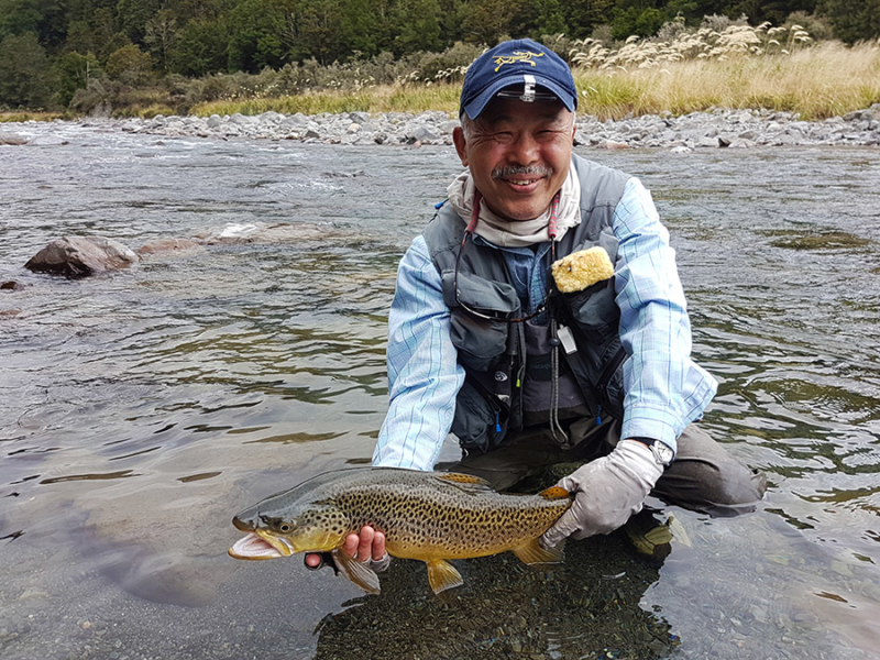 Brown Trout Fly Fishing Nelson New Zealand