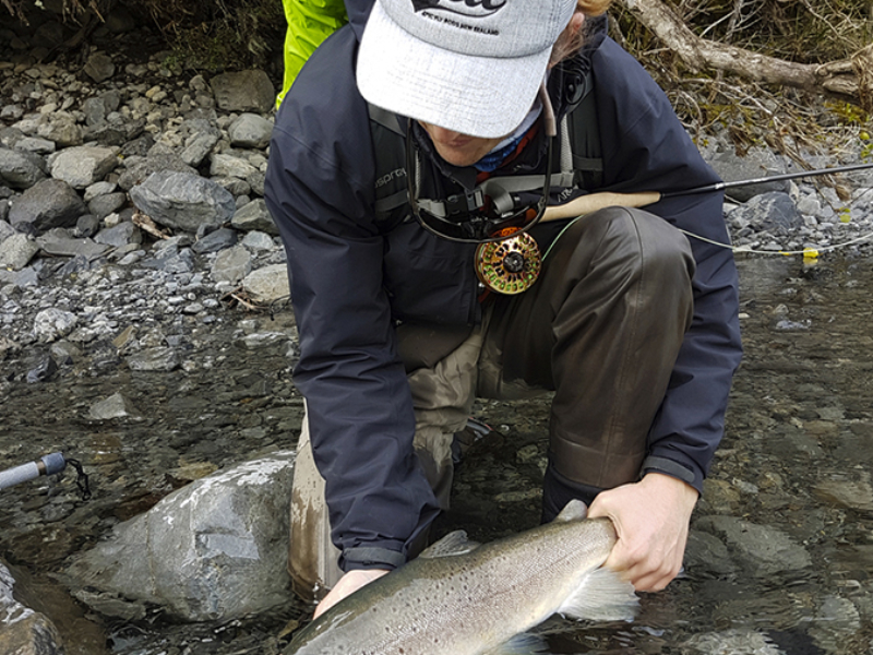 Releasing a fine New Zealand Brown Trout